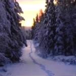 Skogen- se filmsnutt