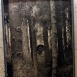 I tjäderskogen