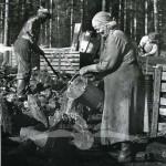 Släckning av glödkol vid rivning av kolmila, Kårböle, 1958. Bror Sundin och hjälpredan Frida.