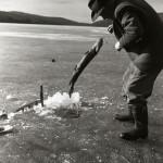 1:a Törnbesöket. Albert rycker upp gäddor april -58 Foto Hilding Mickelsson