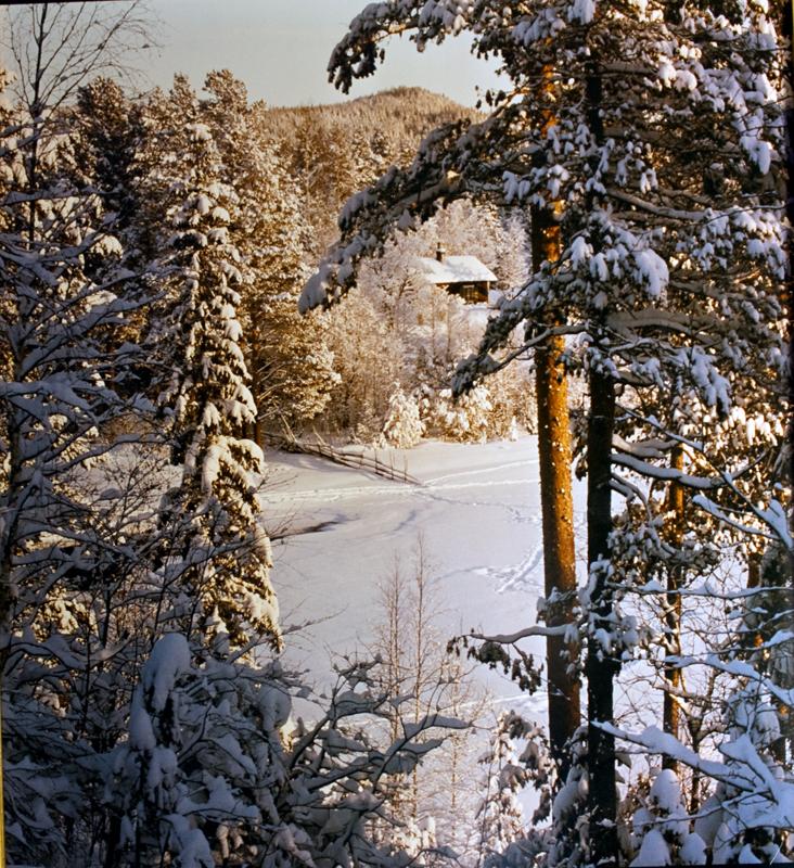 En av många hundra bilder,som Hilding fotograferade på sina besök hos vännen Albert Vikstens författartorp vid Ängratörn.