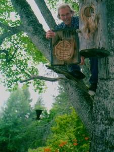 """Här sitter Hilding Mickelsson högt uppe i den stora aspen och visar sin gåva till vännen och förattaren Albert Vikström:"""" Tillängnad Albert och hans Paradisfåglar -Törnets knipor och skrakar- ... på 70-årsdagen. Från Mickel familjen"""" Står det skrivet på insidan av holken vid Albert Vikstens författartorp, Ängratörn. Foto Anna Hildingson Edling"""