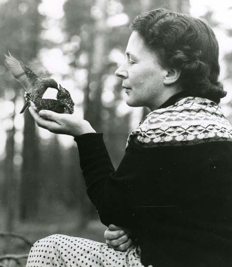 Foto:HM_M  2 606: Honan matar gökungen i handen på Adéle, 13/7 1961.