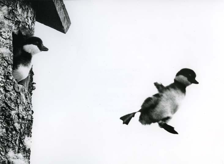 HM 4 813: Knipungarna hoppar ...- Hoppla!