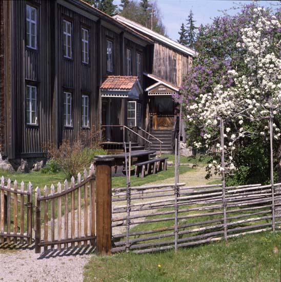 45 628: Äppelblomning, Hembygdsbyn. Rengsjö 21/5 1993. Foto.Hilding Mickelsson
