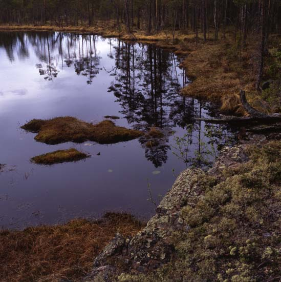 42735 Alfta Foto: Hilding Mickelsson