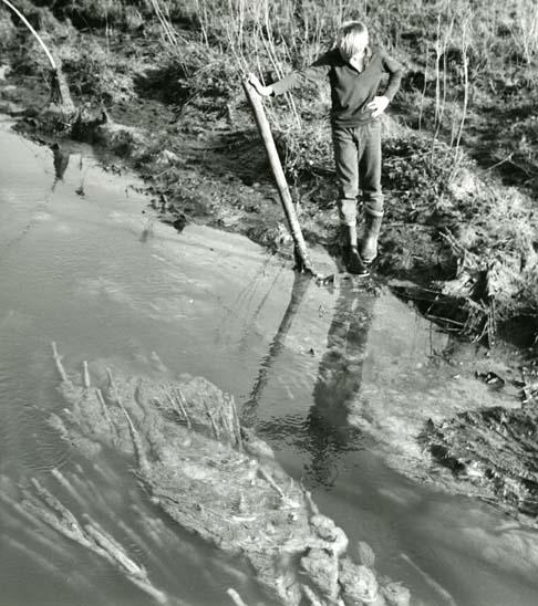 """M 1 709: Industrin har låtit sitt vatten En svampväxt, gråluddig, """"kladdig"""" som ormar i ån...Den """"blommar"""" på våren, försommaren och släpper sedan. Foto Hilding Mickelsson"""