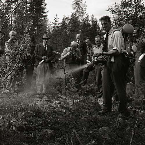 M 84 433: Skogsdagen Trönö - Rengsjö, 12/9 1959. Foto Hilding Mickelsson