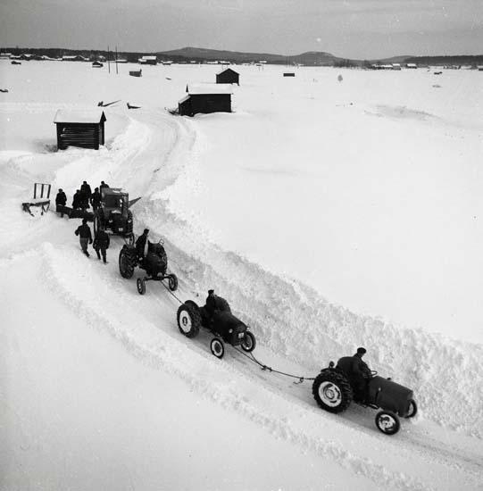 """M 65 536:""""Fyra stycken sammankopplade traktorer, plogar vägen till Skräddans, nedanför Broddens i Glösbo, Foto: Hilding Mickelsson"""
