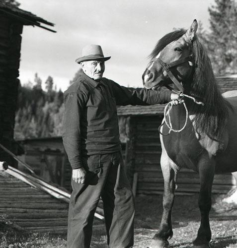 M 90672  Jonas Eriksson och häst Alfta sept. -61 Foto: Hilding Mickelsson