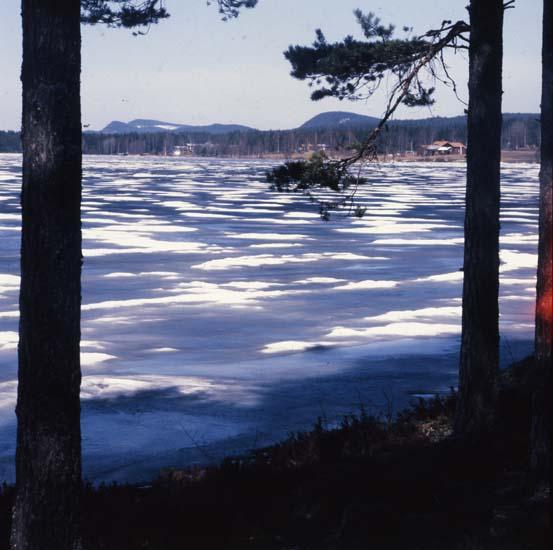 M 47 581: Hölesjön och våris (o snöränder) maj 1985. Foto Hilding Mickelsson