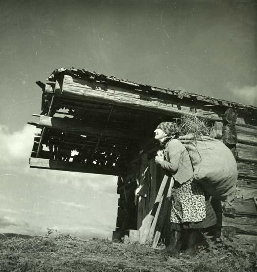 """M 10790 """"Hemåt med gethöet"""", Västerstråsjö, Ängebo, Bjuråker - 1949. Foto: Hilding Mickelsson"""