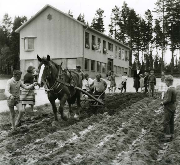 M 879:Annefors Unga Odlare sätter potatis intill nya skolan. Vid årdret folkskollärare Jan Falkeborn i bakgrunden lärarinnan Paulsson, maj 1954 Foto: Hilding Mickelsson