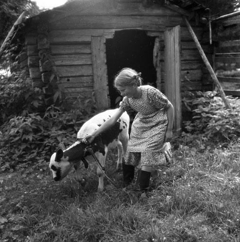 M 67 059:Hamravallen 16/8 1951 Foto: Hilding Mickelsson