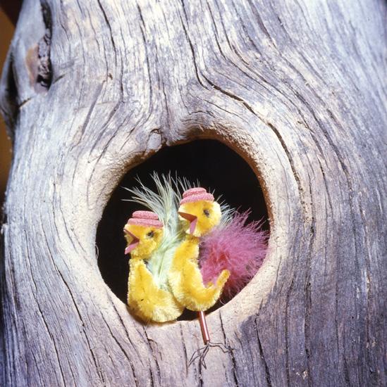M 30 120: Påskkycklingar i ihålig trädstam-  Foto: Hilding Mickelsson