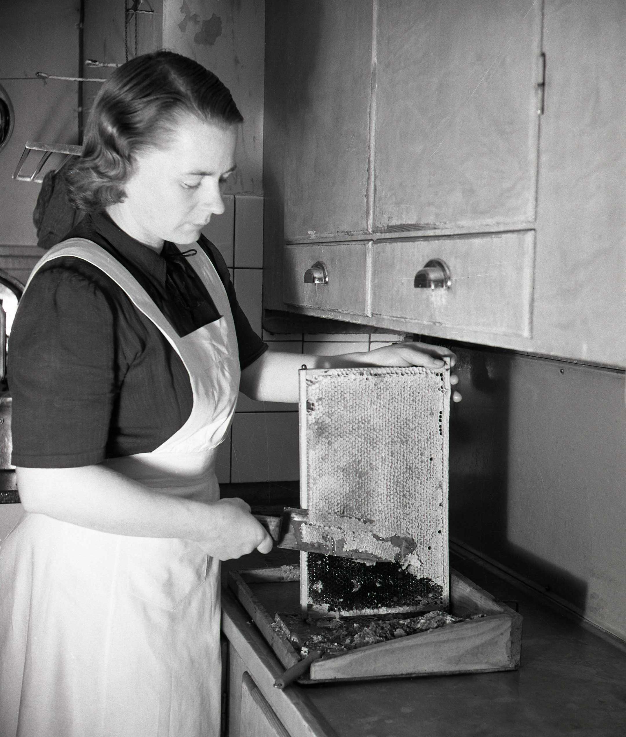 M 115 868: Adéle med honungsram, november 1951. Foto: Hilding Mickelsson©