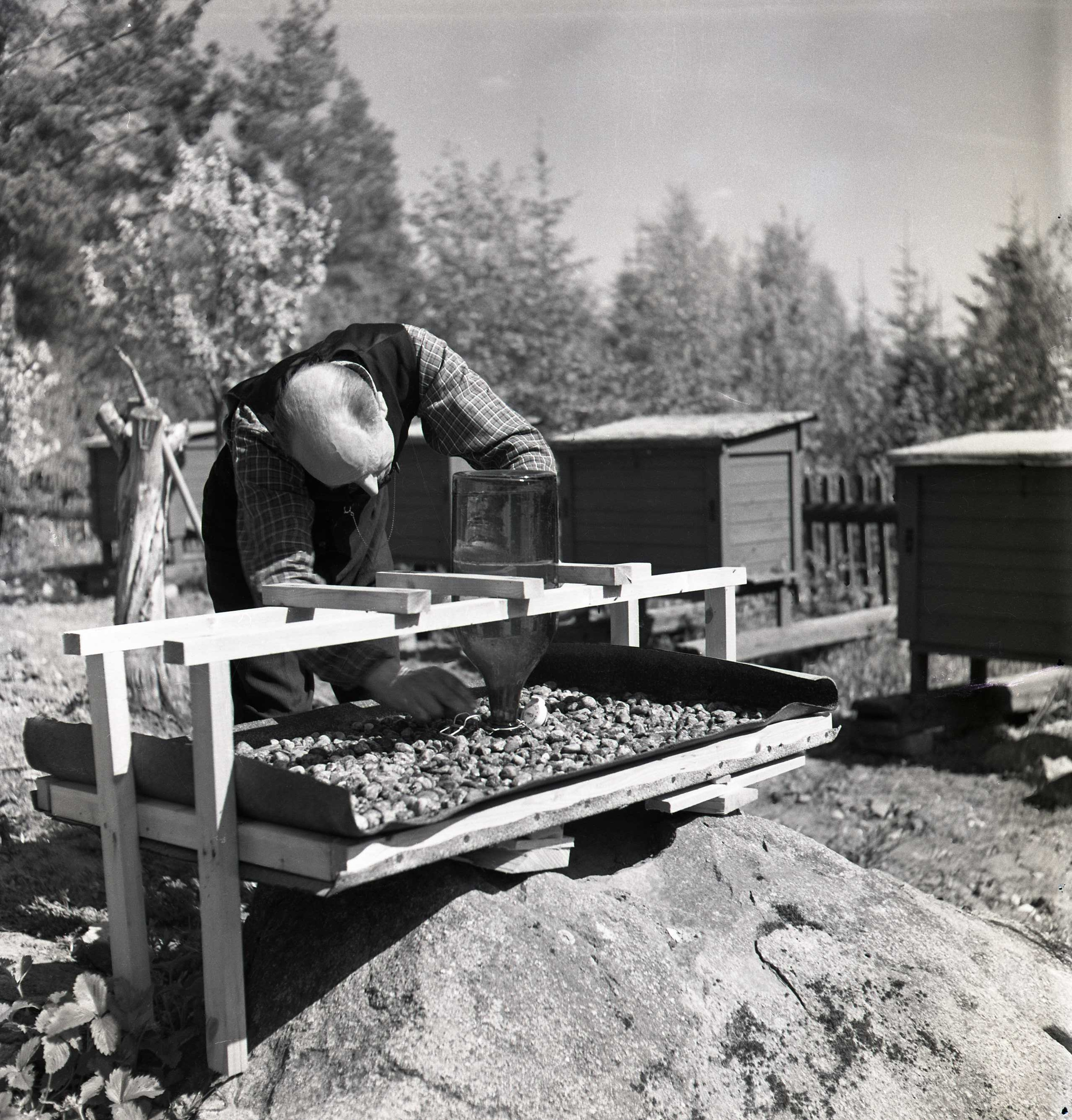 M 115 960: I bigården, Bollnäs maj 1950. Foto: Hilding Mickelsson©